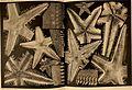 Beiträge zur Kenntnis der Meeresfauna Westafrikas (1914-15) (20354864112).jpg