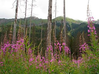 Protected area - Strict Nature reserve Belianske Tatras in Slovakia.