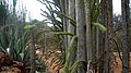 Berenty reserve.jpg