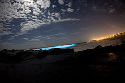 meaning of bioluminescence