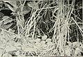 Bird notes (1919) (14565267159).jpg
