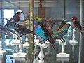 Birdoj en Muzeo.jpg