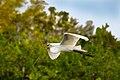 Birds (17861088386).jpg