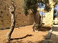 Birgu fortifications and whereabouts 11.jpg