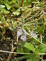 Blütenpflanze510.JPG