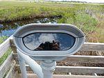 Black Point Wildlife Drive, Merritt Island FL - Flickr - Rusty Clark (203).jpg