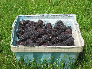 Rubus occidentalis - Image: Black raspberries in a basket, side view