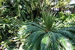 Bloedel Floral Conservatory, Queen Elizabeth Park - Vancouver, Canada - DSC07502.JPG