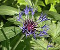 Blumen bp 034be wp22.jpg