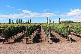 Bodega Dante Robino, Mendoza.jpg