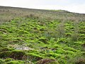 Boggy ground below Maul Rigg - geograph.org.uk - 451744.jpg