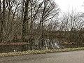 Bois inondé rue du Val d'Amour à Montbarrey (Jura).JPG