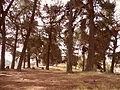 Bosque en villa alemana.JPG