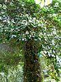 Botanični vrt (3990916218).jpg