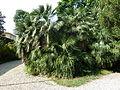 BotanicGardensPisa (82).JPG