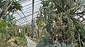 Botanischergartendresden-juli2016 - 17.jpeg