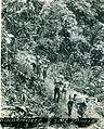 Bougainville USMC Photo No. 1-3 (21412937389).jpg