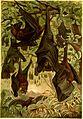 Brehms Tierleben - allgemeine Kunde des Tierreichs - mit 1800 Abbildungen im Text, 9 Karten und 180 Tafeln in Farbendruck und Holzschnitt (1890) (20419302851).jpg