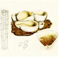 Bresadola - Aleuria vesiculosa.png