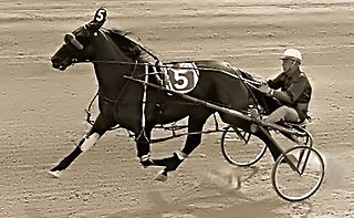 Bret Hanover American Standardbred racehorse