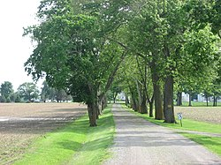 Tree-lined farmstead driveway on Morral-Kirkpatrick Road