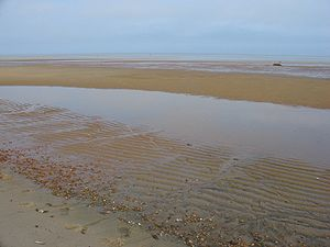 Mudflat - Mudflats in Brewster, Massachusetts, United States, extending hundreds of yards offshore at the low tide. The line of seashells in the foreground indicates the high-water mark.
