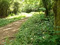 Bridleway South of High Ashurst - geograph.org.uk - 1396367.jpg