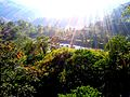 Brilliant Morning Rays, Saramsa Garden, Gangtok, Sikkim Wiki Loves Earth 2017 - India.jpg