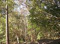 Brisbane-Forest-Park-2.jpg