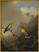 "Brooklyn Museum - Two Humming Birds ""Copper-tailed Amazili"" - Martin Johnson Heade.jpg"