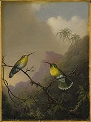 Two Humming Birds: Copper-tailed Amazili
