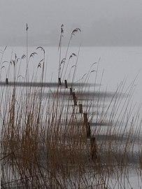 Buhnen im zugefrorenen Parsteinsee.jpg