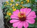 Bunga Mekar.jpg