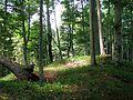 Burgstall Lichtenegg GO-4.jpg