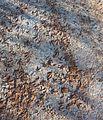 Burhinus grallarius tracks - Christopher Watson.jpg