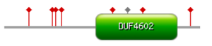 C1orf131 - Graphical overview of the human protein C1orf131 with DUF4602 shown in green, phosphorylation in red points, and acetylation in gray point.