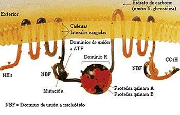 Fisiología Humana Genética Y Herencia Wikilibros