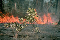 CSIRO ScienceImage 394 Patchy Fire.jpg