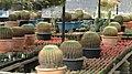 Cactus - panoramio (2).jpg