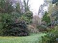 Camellias at Bojorrow - geograph.org.uk - 384956.jpg