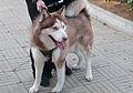 Caminata por los perros y animales Maracaibo 2012 (16).jpg
