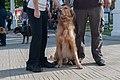 Caminata por los perros y animales Maracaibo 2012 (25).jpg