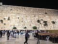 Caper bushes on the Western Wall.jpg