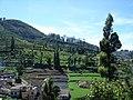 Carrot fields ooty tamilnadu - panoramio.jpg
