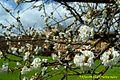 Castrocaro Terme-La Rocca-DSC 2165.jpg