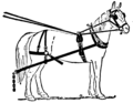 Cavalo.png