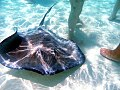 Cayman stingray city sandbar.jpg