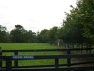 Celtic Swing British-bred Thoroughbred racehorse