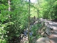 Central Park jogger case - Wikipedia