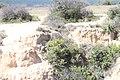 Cernícalo en el Pozo del Gavilán - panoramio.jpg